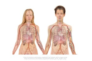 5 Body Parts You Can Live Without, From Stomach To Reproductive Organs