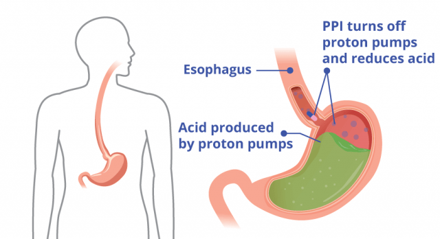 Does How Work Pump Proton