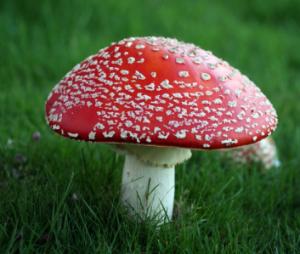 Psilocybin Mushrooms Of The World An Identification Guide Pdf