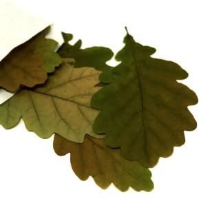 Getrocknete Eichenblätter