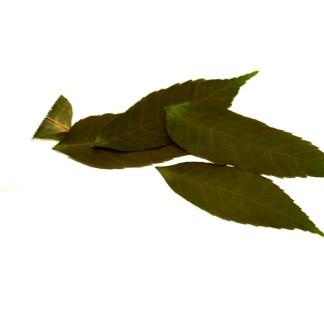 Magische Eschenblätter
