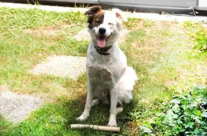 Kaustab für aufgeweckte Hunde