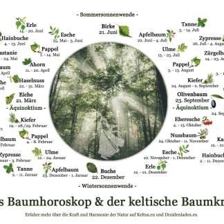Der Baumkreis als Poster