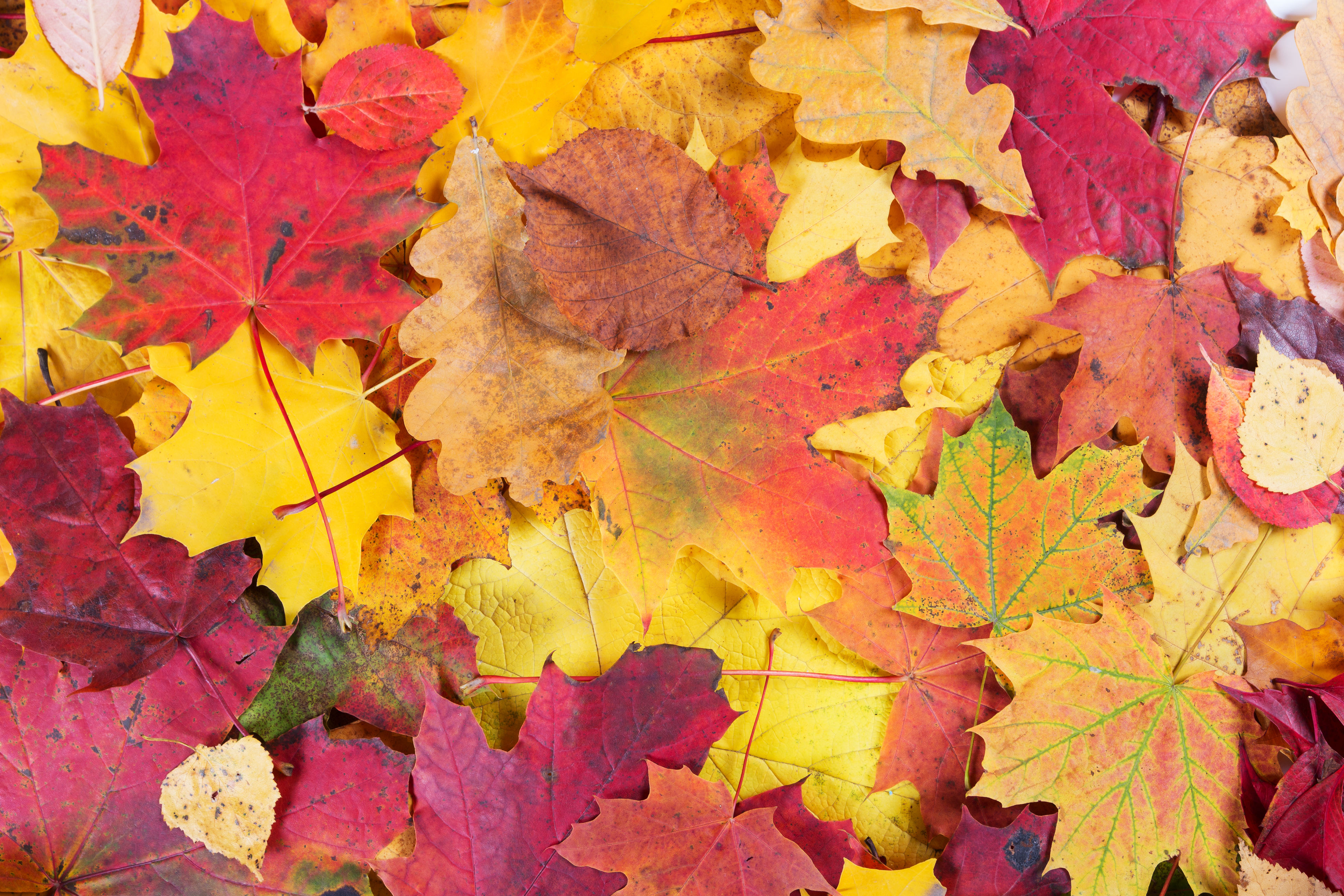 Leaves Wallpaper Fall 45364195 Autumn Fall Leaves Background Garden Amp Home