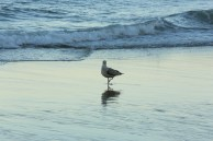 Gull by Rachid Aadnani ©2013 http://tizi.org/