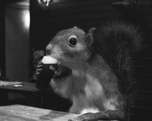 Guiness Squirrel 500x400 Guiness Squirrel