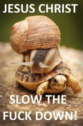 slow the fuck down 332x500 slow the fuck down