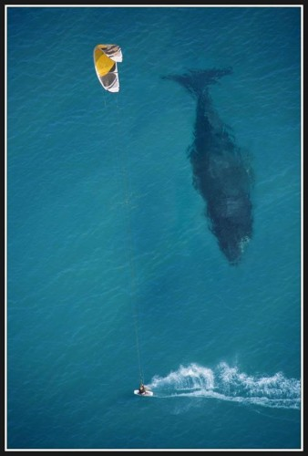 man and whale 338x500 man and whale