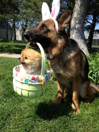 doggy easter 375x500 doggy easter