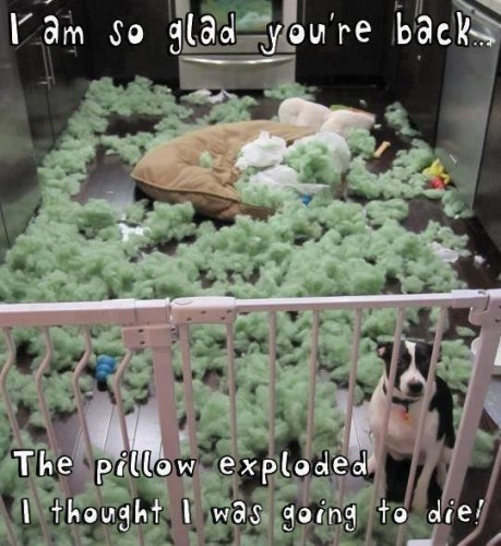 Im so glad your back the pillow exploded I thought I was going to die 459x500 Im so glad your back   the pillow exploded I thought I was going to die