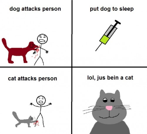 cat attacks person 500x454 cat attacks person