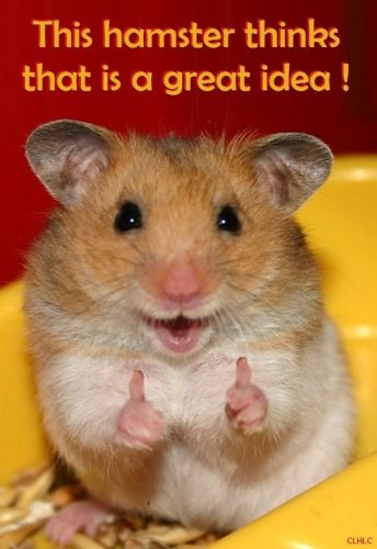this hamster thinks that is a great idea
