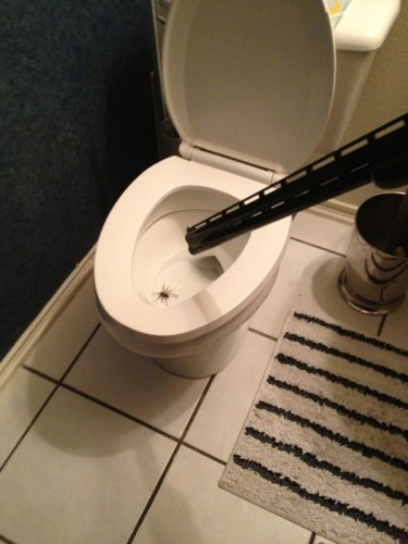 toilet spider solution 375x500 toilet spider solution