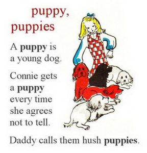 Adult Dictionary   puppy, puppies.jpg