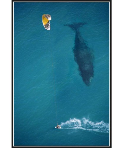 kite surfing with humpback whale below by Michael Swaine 416x500 kite surfing with humpback whale below by Michael Swaine