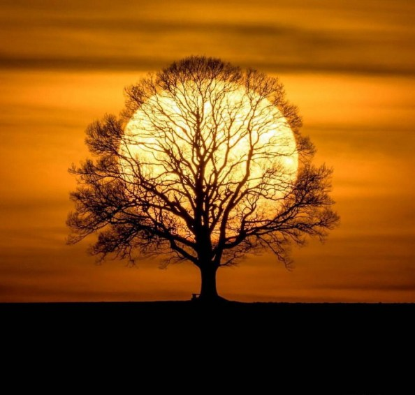 sunset tree sunset tree
