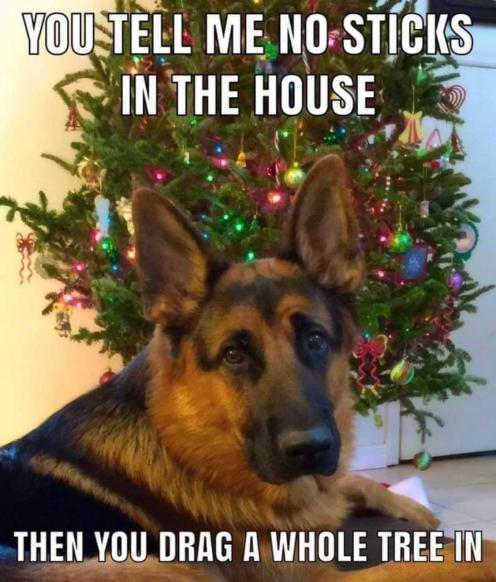 no sticks in the house