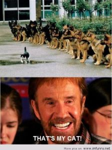 Thats My Cat Funny Chuck Norris Picture