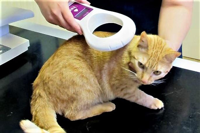 Risultati immagini per gatti microchip
