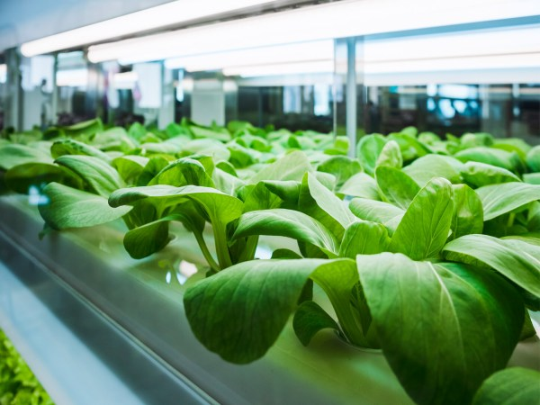 Growing Vegetables Hydroponic Organic - Andrew Weil