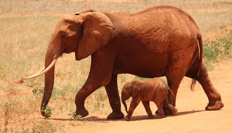 elephant mom n kid