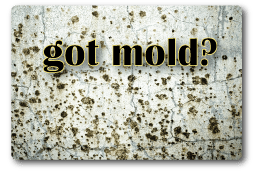 mold wall restoration service