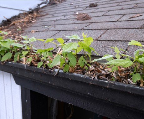 Impact To Your Home's Foundation If You Don't Have An Effective Gutter System