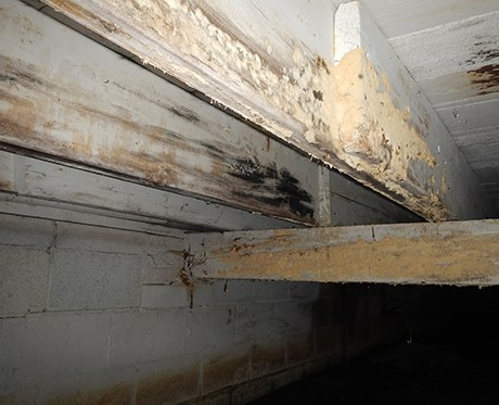 Why does my Crawl Space smell musty?