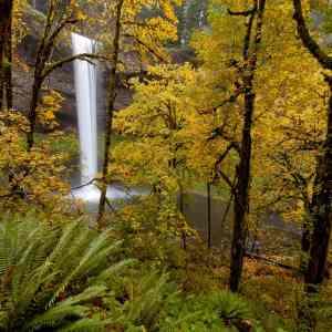 Arrival of Elusive Autumn