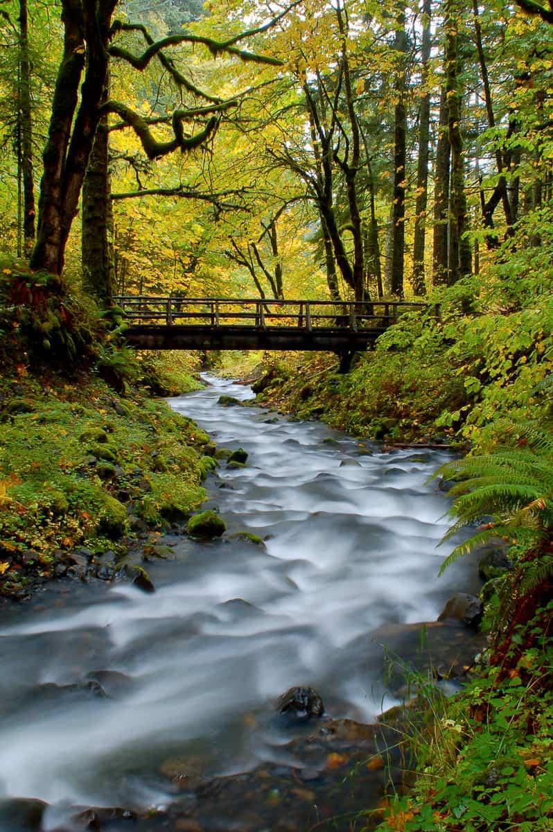 Gorton Creek in the Fall
