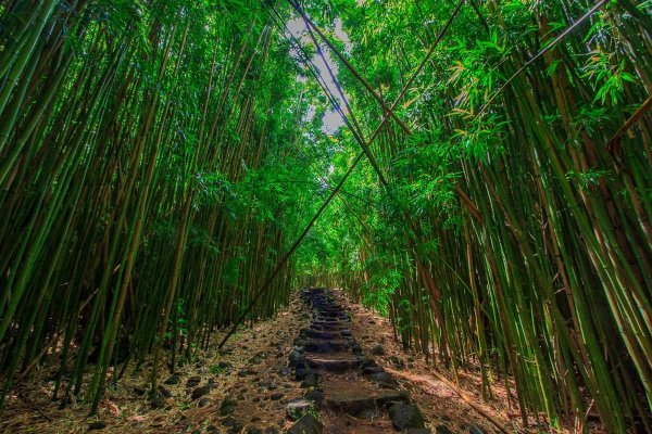 Haunting Bamboo Forest