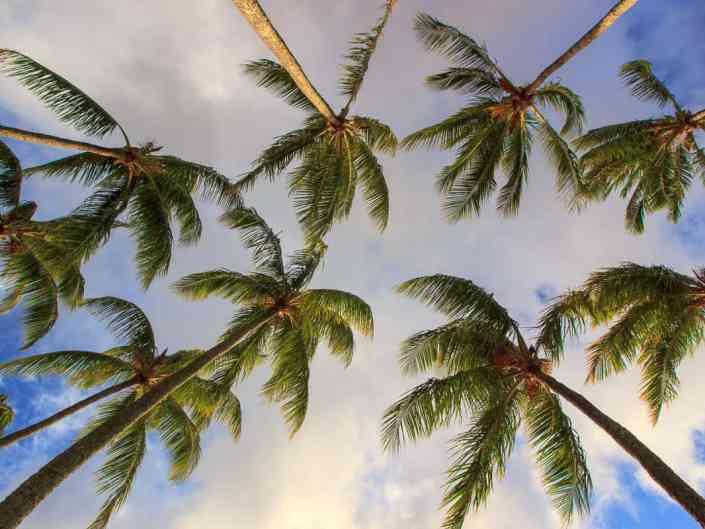 Kapalua Palms