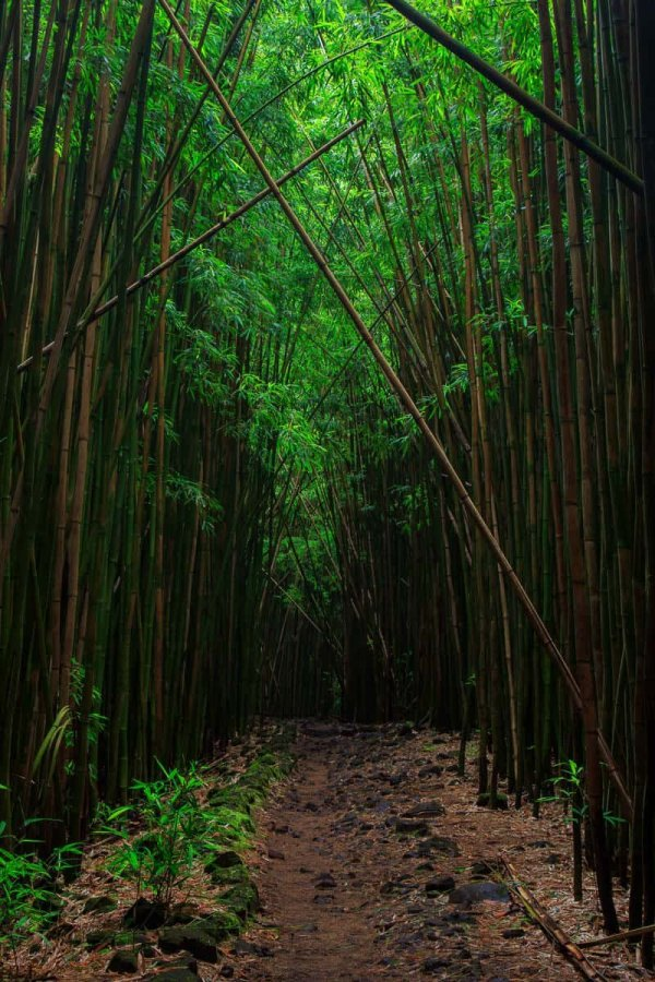 Leaning Bamboo