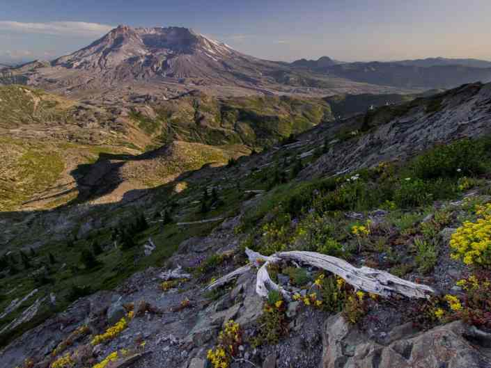 Life at Mt St Helens