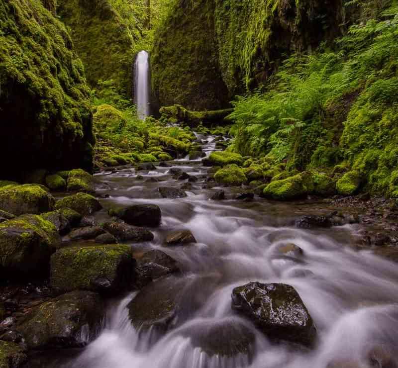 Lush Fern Gully Falls