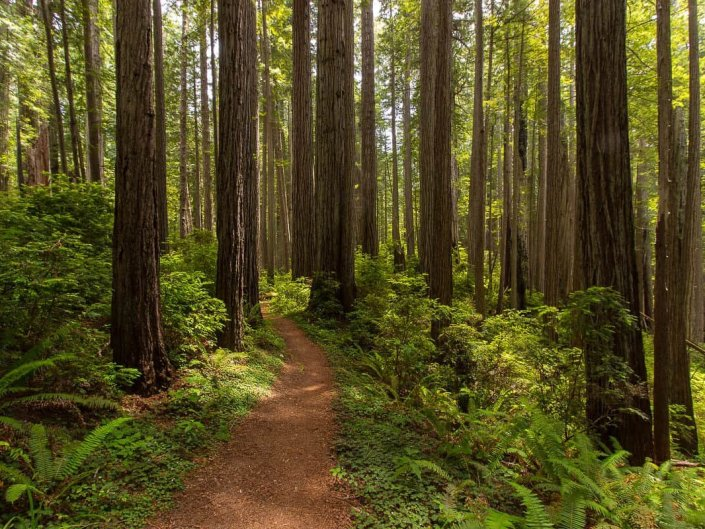Miner's Ridge Trail