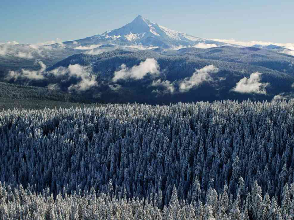Mount Hood from Larch Mountain
