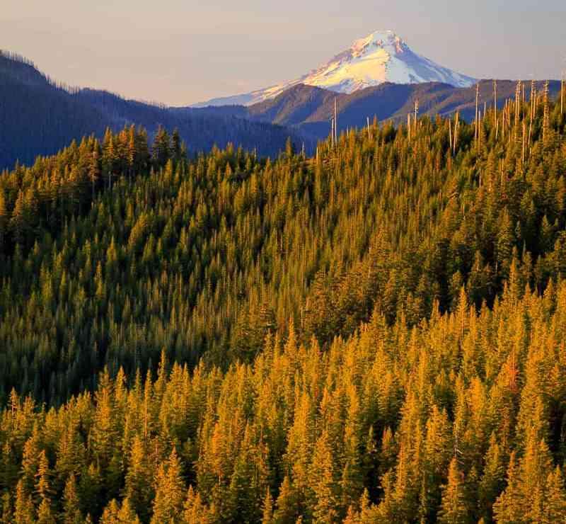 Mt Hood National Forest