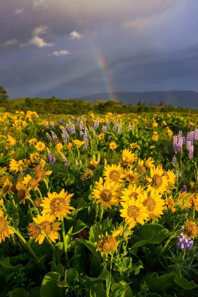 Rowena Rainbow