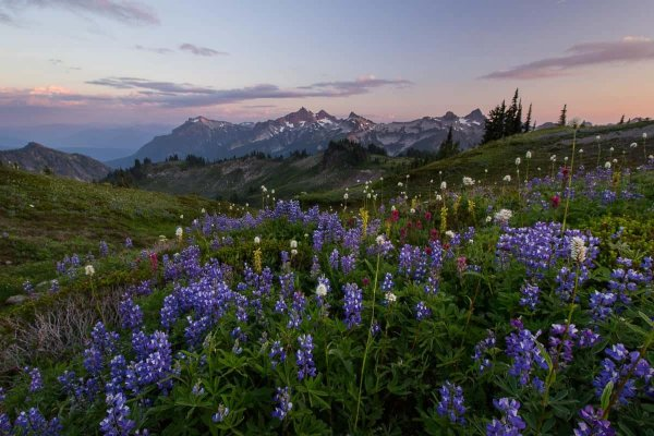 Tatoosh Meadows