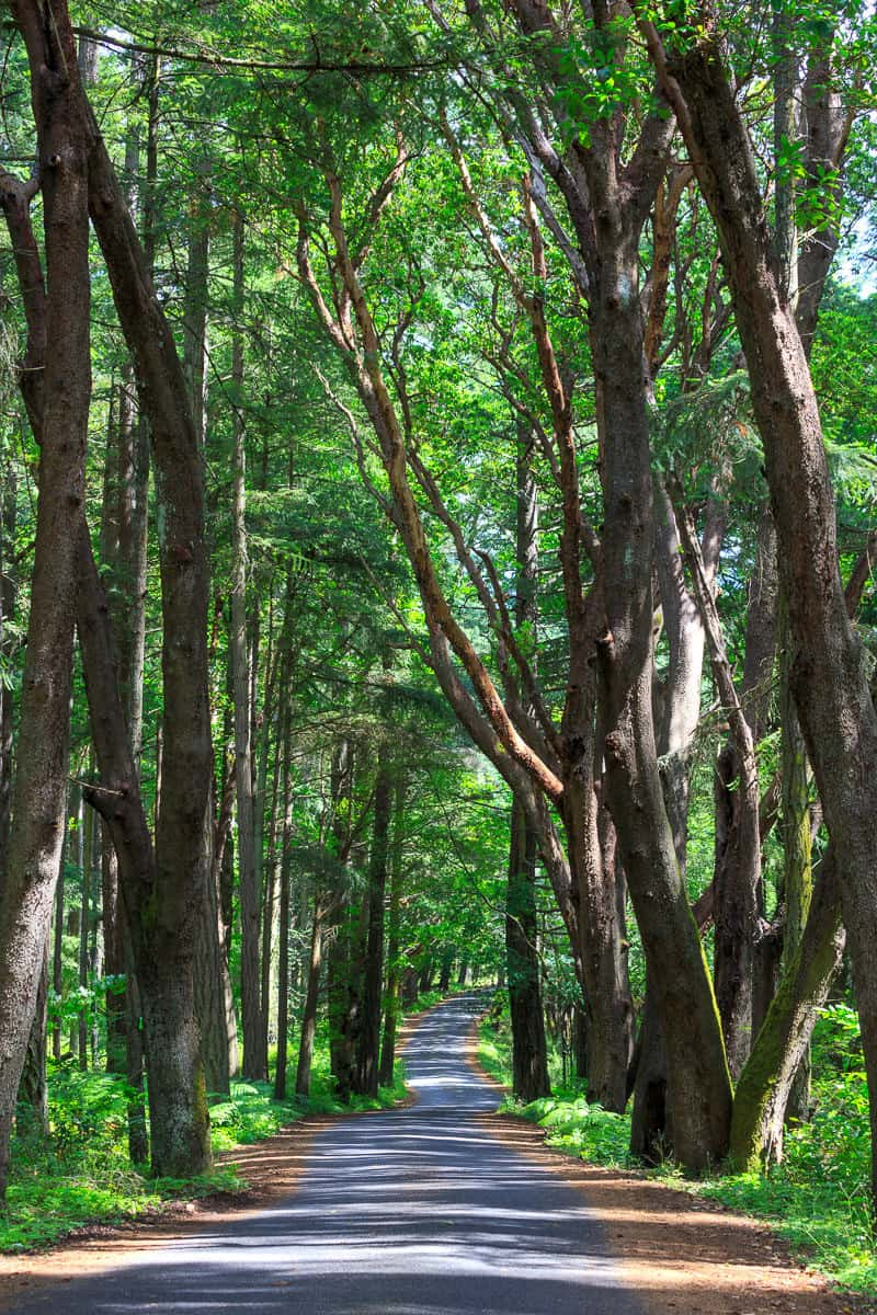 A Forested Drive
