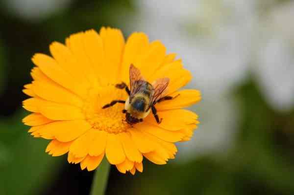 Pollen Harvesting