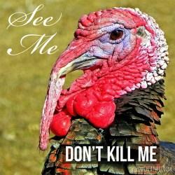 See me, Dont kill me