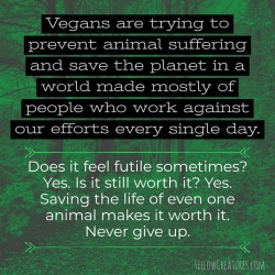 Vegans-never-give-up