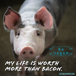 worth-more-than-bacon