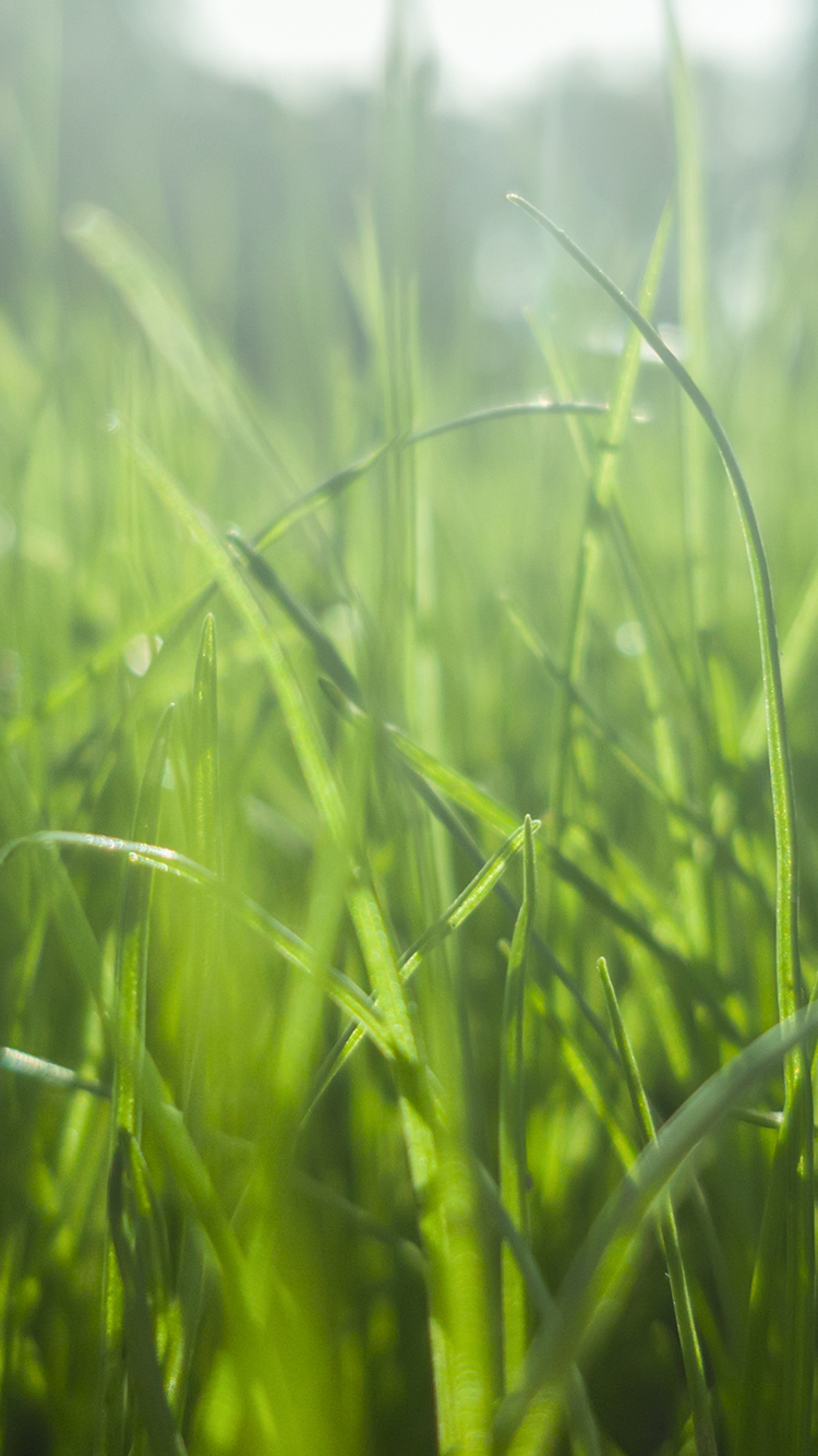 Wallpaper For Mobile Iphone 5 Grass Lines By Gieffe22 Dsktps