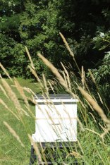 A beehive, added this year.