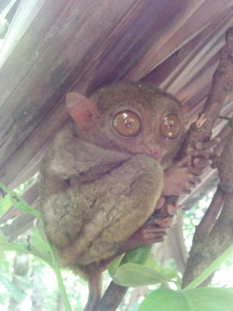 ¡Qué mono más mono!