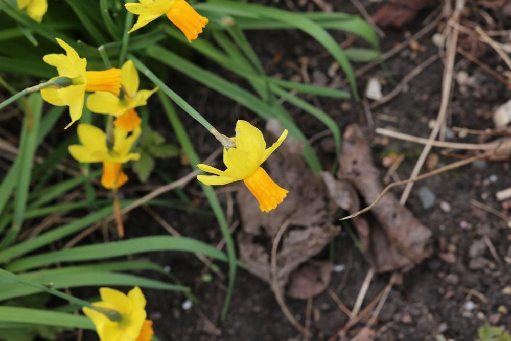 photo Macro de fleur sans tube allonge