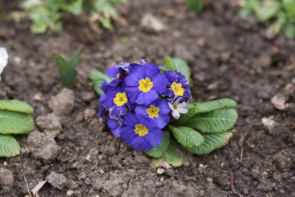 photo de fleur sans tube allonge